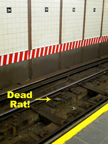 34th Street Subway Rat